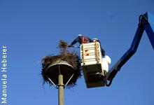 NABU und Wemag richten Storchennester wieder her