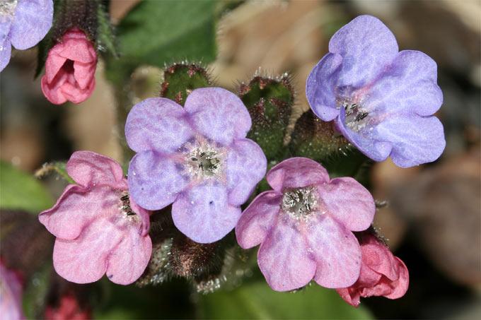Bienenfreundliche Garten Nabu Mecklenburg Vorpommern