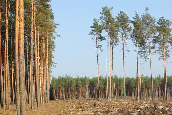Beliebt Bevorzugt Mythos Wald - NABU Mecklenburg-Vorpommern @IF_53