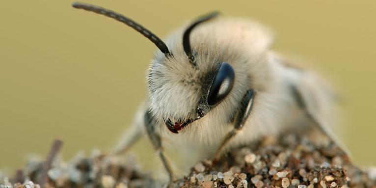 Fensterrahmen bienen im Bienen nisten